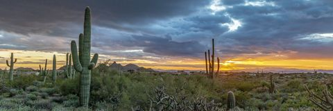 Arizona Sunset Landscape With Saguaro Cactus Phoenix Area. Wide Angle Image of Vibrant Arizona Sunset Landscape With Saguaro Cactus & clouds Phoenix Area stock photo