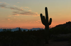 Arizona sunset  a saguaro cactus Royalty Free Stock Images