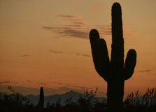 Arizona sunset  with silhouette of a saguaro cactus and mountain Royalty Free Stock Photo