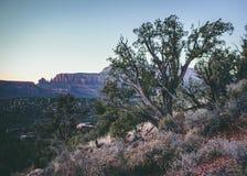 Arizona sunset trees landscape nature. Arizona sunset landscape trees nature mountains color light ground colors royalty free stock image