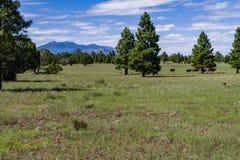 Arizona Trail: Anderson Mesa AZT-30 Royalty Free Stock Photo