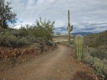Arizona Trail. A hiking trail leads through the desert fauna in Arizona Stock Image
