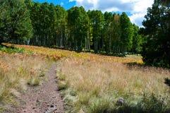 Arizona Trail Passage 34 Stock Image