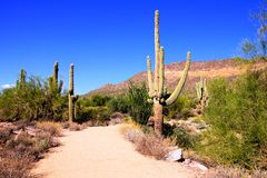 Arizona-Wüste Lizenzfreie Stockbilder