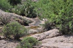 Arizona-Wüste Stockfotografie