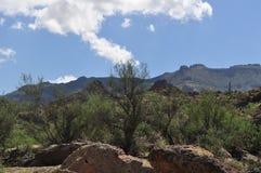 Arizona-Wüste Lizenzfreie Stockfotos