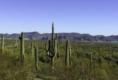 Arizona-Wüste Stockfotos