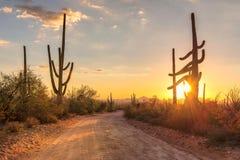Arizona-Wüste bei Sonnenuntergang mit Saguarokakteen in der Sonora-Wüste nahe Phoenix lizenzfreie stockfotografie