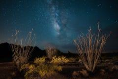 Arizona-Wüste mit Ocotillo und Milchstraße Stockbilder