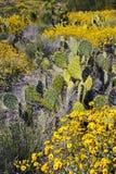 Arizona-Wüstekaktus und Wildflowers lizenzfreie stockfotos