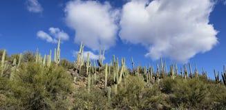 Arizona-Wüsten-Landschaft stockfotografie