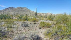 Arizona-Wüsten-Landschaft lizenzfreie stockfotos