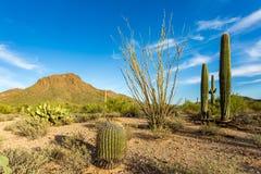 Arizona-Wüsten-Landschaften lizenzfreie stockfotografie