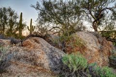Arizona-Wüsten-Stillleben Lizenzfreie Stockfotos