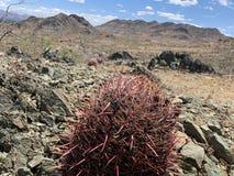 Arizona-W?sten-Wandern lizenzfreies stockbild