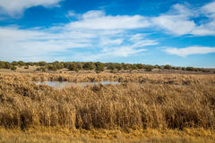 Arizona wetlands and animal riparian preserve. Royalty Free Stock Image