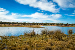 Arizona wetlands and animal riparian preserve. Royalty Free Stock Images