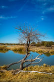 Arizona wetlands and animal riparian preserve. Stock Images