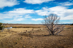 Arizona wetlands and animal riparian preserve. royalty free stock photography