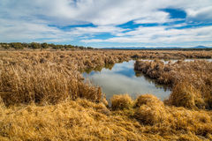 Arizona wetlands and animal riparian preserve. Stock Photo
