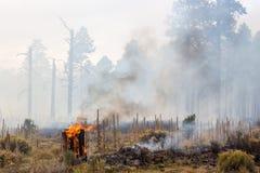 Arizona Wild Fire Stock Photos