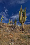 Arizona winter. A brisk January morning in Arizona Royalty Free Stock Image