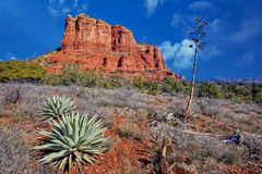 Arizona zima Zdjęcie Royalty Free