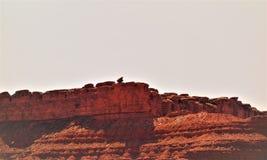 arizonan zdjęcie royalty free
