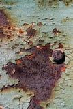 Ark av rostig metall med sprucken och flagig målarfärg, en metallsurfa Arkivbilder