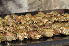 Ark clams on grill Royalty Free Stock Photography