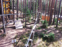 Arkana park w sosnowym lasowym arkana śladzie dla przejścia przy wzrostem Fotografia Stock