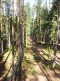 Arkana park w sosnowym lasowym arkana śladzie dla przejścia przy wzrostem Obrazy Royalty Free