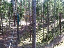 Arkana park w sosnowym lasowym arkana śladzie dla przejścia przy wzrostem Zdjęcia Royalty Free