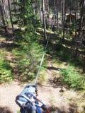 Arkana park w sosnowym lasowym arkana śladzie dla przejścia przy wzrostem Zdjęcia Stock