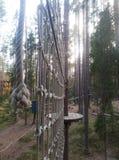 Arkana park w sosnowym lasowym arkana śladzie dla przejścia przy wzrostem Zdjęcie Royalty Free