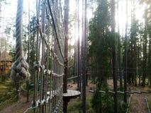 Arkana park w sosnowym lasowym arkana śladzie dla przejścia przy wzrostem Obraz Royalty Free