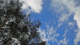 Arkana rozciągająca wierzchołek drzewo zbiory wideo