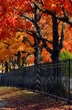 Arkansas Autumn in Rogers. Fence row in Rogers, Arkansas is lined by vivid orange and gold maple trees.  Black metal fencing runs length of trees Stock Image