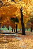 Arkansas malte Gold Lizenzfreies Stockbild