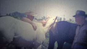 ARKANSAS, USA - 1965: Police riding a horse bareback in the barn. stock video footage