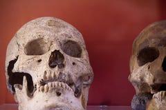 Arkeologiska utgrävningar av en forntida mänsklig skelett- och människaskalle royaltyfria bilder