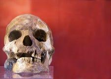 Arkeologiska utgrävningar av en forntida mänsklig skelett- och människaskalle arkivfoton