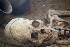 Arkeologiska utgrävningar av en forntida mänsklig skelett- och människaskalle arkivbilder