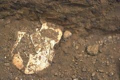 Arkeologiska utgrävningar av fyndskallebenet av skelettet i den mänskliga jordfästningen, detalj av forntida studier, förhistoria royaltyfria foton