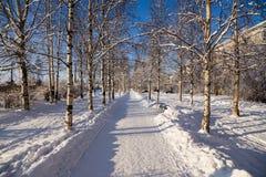 Arkhangelsk, Rusia Callejón nevado del abedul Imágenes de archivo libres de regalías