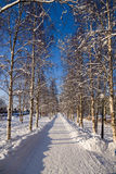 Arkhangelsk, Russia. Birch alley Royalty Free Stock Image