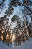 Arkhangelskoye, Μόσχα, Ρωσία Στοκ Φωτογραφίες