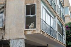 Arkitektur av Tel Aviv arkivfoto