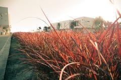 Arkitektur och äng med solnedgång Arkivbild