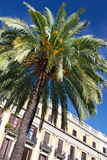 arkitekturbarcelona palmträd Royaltyfri Bild